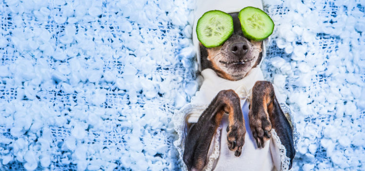 Pamper your pets with an at-home spa