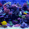 smart aquarium technology makes maintenance easier