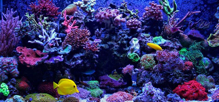 smart aquarium technology makes maintenance easier